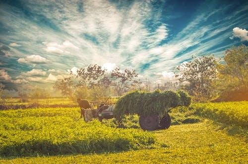 Foto profissional grátis de asno, azul, beleza na natureza