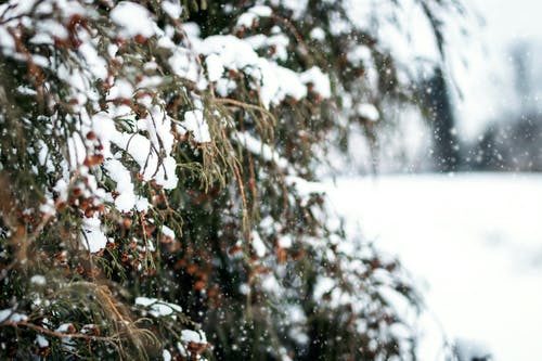 Ilmainen kuvapankkikuva tunnisteilla flunssa, huurre, huurteinen, ihmemaa