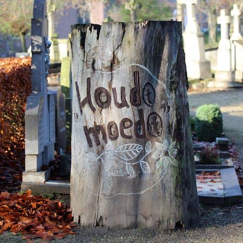 """Foto d'estoc gratuïta de soca d'arbre amb inscripció """"guarda coratge"""""""