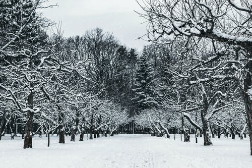 Snow Covered Trees In The Park