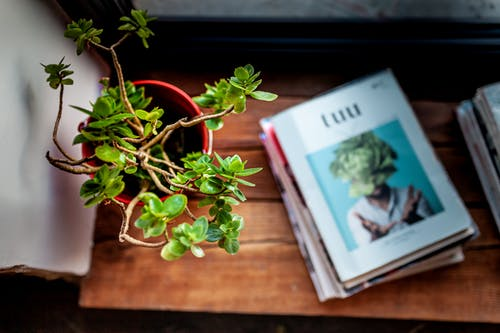 Green Potted Plant on Brown Wooden Table Next to Pile of Books