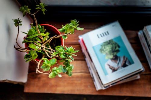 책 더미 옆 갈색 나무 테이블에 녹색 화분