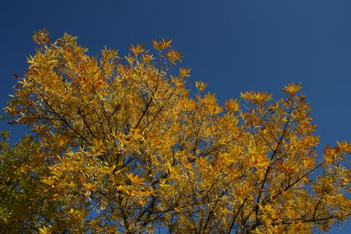 Free stock photo of blue sky, PJHuysse