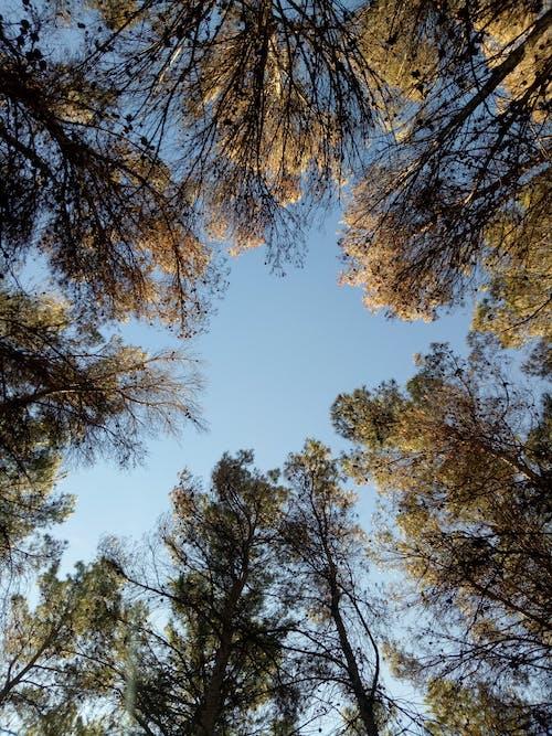 Foto stok gratis alam