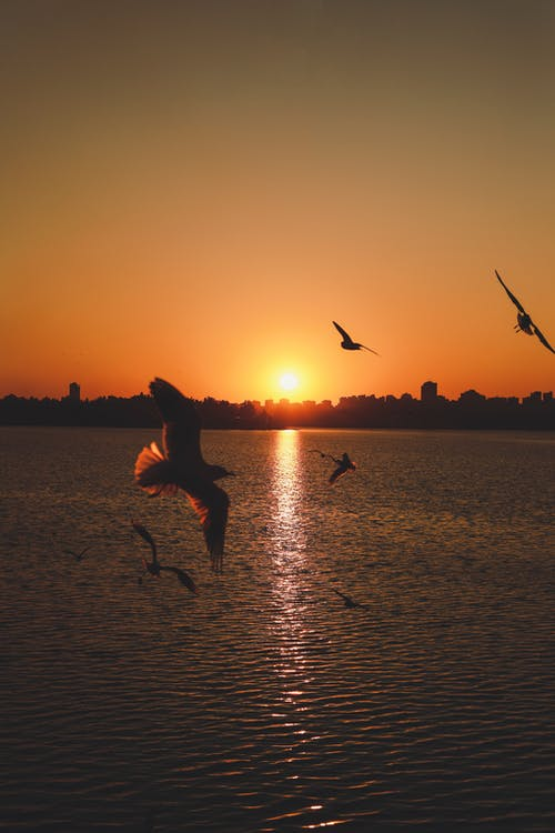 Seagulls flying over calm sea in sunset