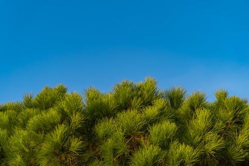 Green Plant Under Blue Sky
