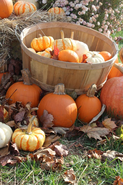 Free stock photo of pumpkins, vegetables