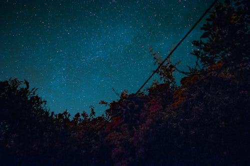 Free stock photo of blue sky, cosmos, galaxy, garden at night