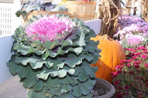 Free stock photo of autumn flowers