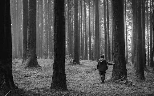 Δωρεάν στοκ φωτογραφιών με άνθρωπος, ασπρόμαυρο, δάσος, δέντρα
