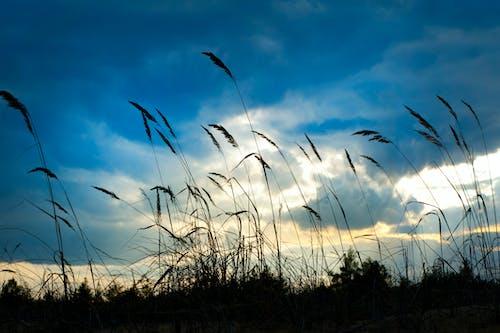 Fotobanka sbezplatnými fotkami na tému denné svetlo, hracie pole, lúka, mraky