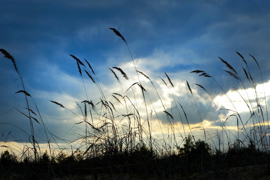 clouds, daylight, field