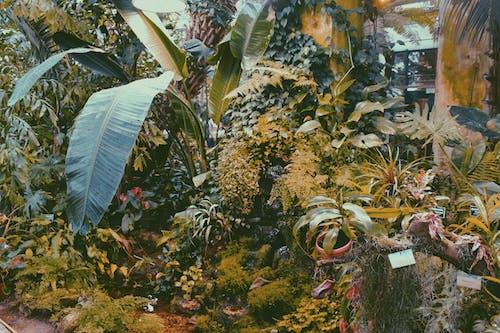 Ingyenes stockfotó gyárak, kert, levelek témában