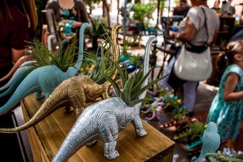 Free stock photo of dinosaur, marketplace, street market, succulent