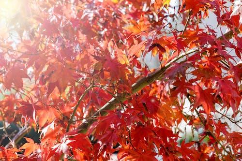 Free stock photo of autumn color, autunno, foglie