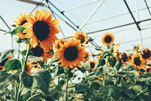 Gratis stockfoto met bloeiend, bloemen, bloesem, boerderij