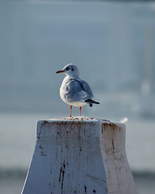 White and Gray Bird on Brown Wooden Plank