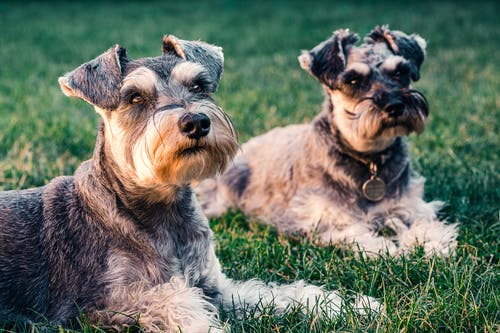 Foto profissional grátis de adorável, animais de estimação, animais domésticos