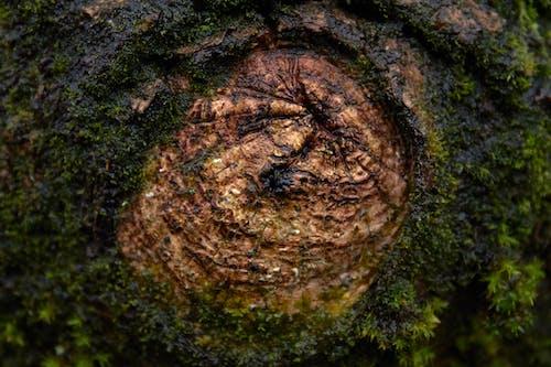 Foto d'estoc gratuïta de arbre, fusta, molsa, nus