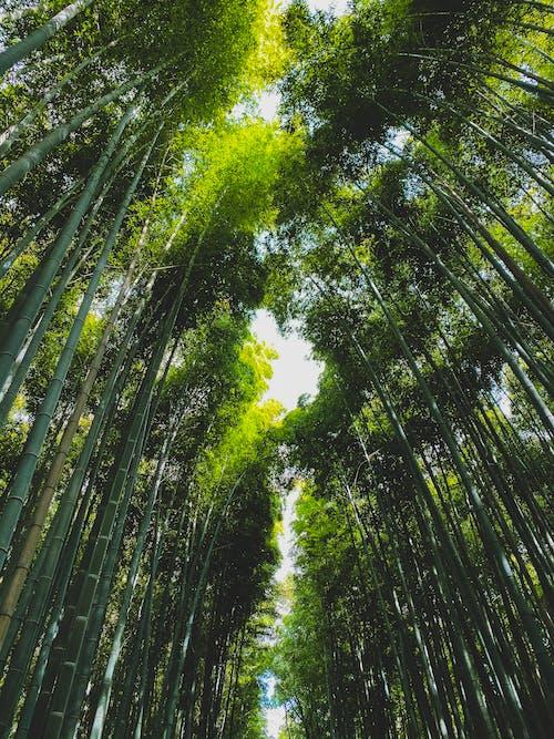 Gratis lagerfoto af bambus, blad, farverig, flora