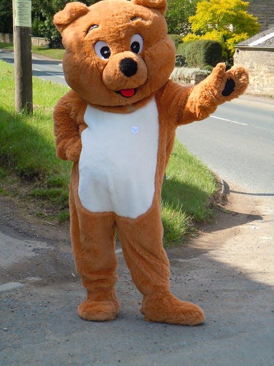 Free stock photo of teddy bear