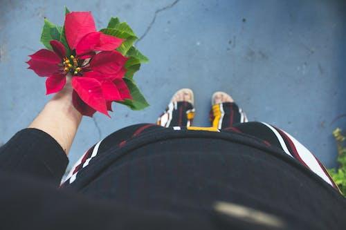 Gratis arkivbilde med blomst, blomster, blomstret, eventyr