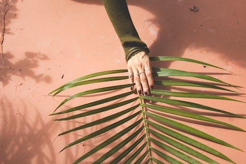 Gratis arkivbilde med blader, fred, gripe, hånd