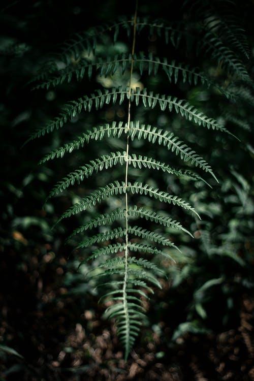 Gratis lagerfoto af bregne, bregne blade, bregneblad, flora