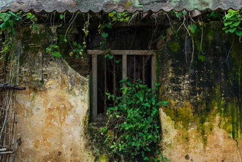 Free stock photo of abandoned house, moss, old archetecture
