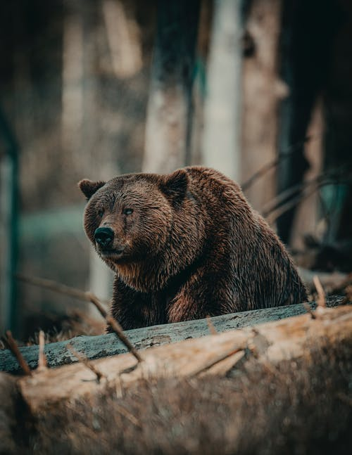 Shallow Focus Photo of Bear