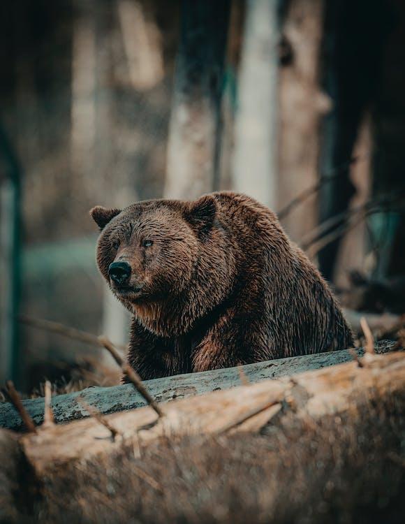 Shallow Focus Photo of Bear