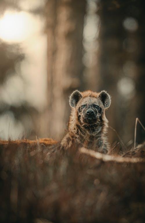 Fotobanka sbezplatnými fotkami na tému cicavec, denné svetlo, divé zviera, divočina