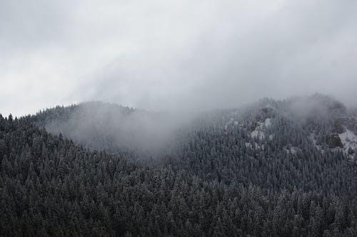 Základová fotografie zdarma na téma denní světlo, hora, jehličnan, krajina