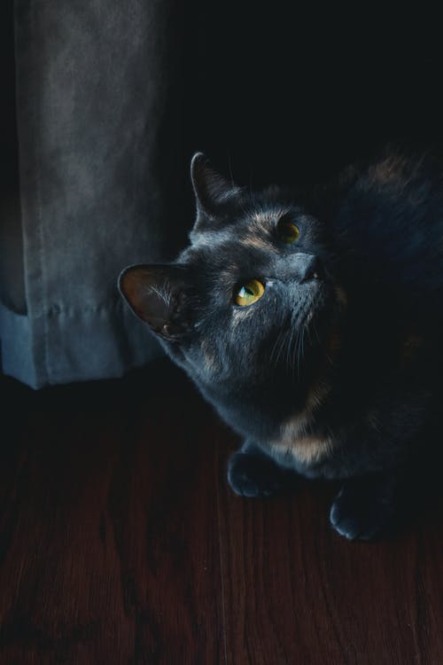 Black Cat on Brown Wooden Table