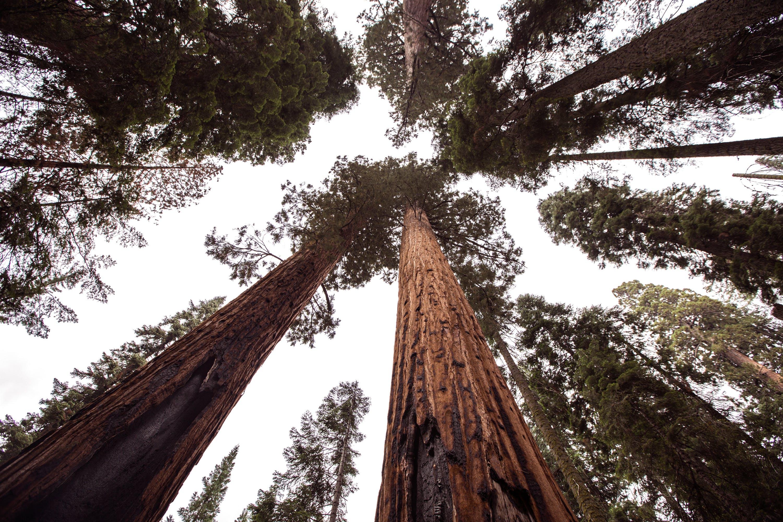 吠, 天空, 森林, 樹木 的 免费素材照片