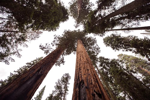 Foto d'estoc gratuïta de alt, arbres, bosc, boscos