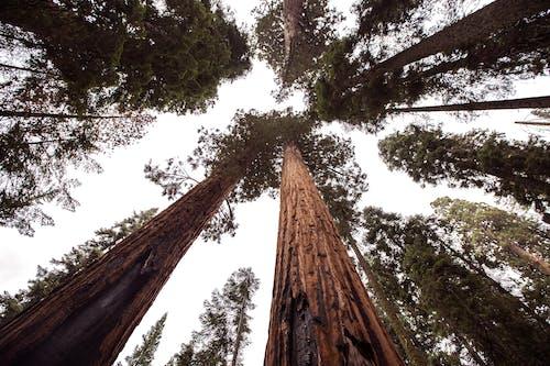 Kostenloses Stock Foto zu bäume, borke, groß, himmel