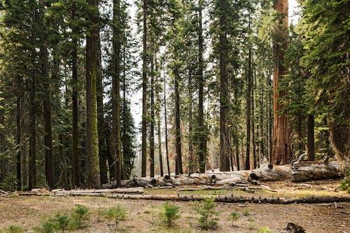 Foto d'estoc gratuïta de arbres, bagul, bosc, boscos