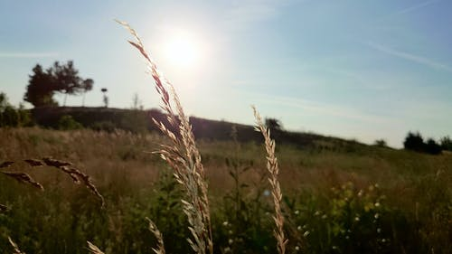 Δωρεάν στοκ φωτογραφιών με γήπεδο, δημητριακά, ήλιος, ξέφωτο