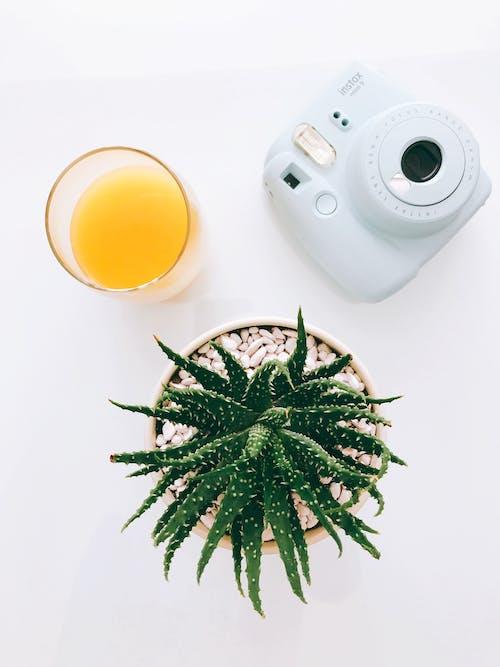 instax, 다육, 다육식물, 술을 마시다의 무료 스톡 사진