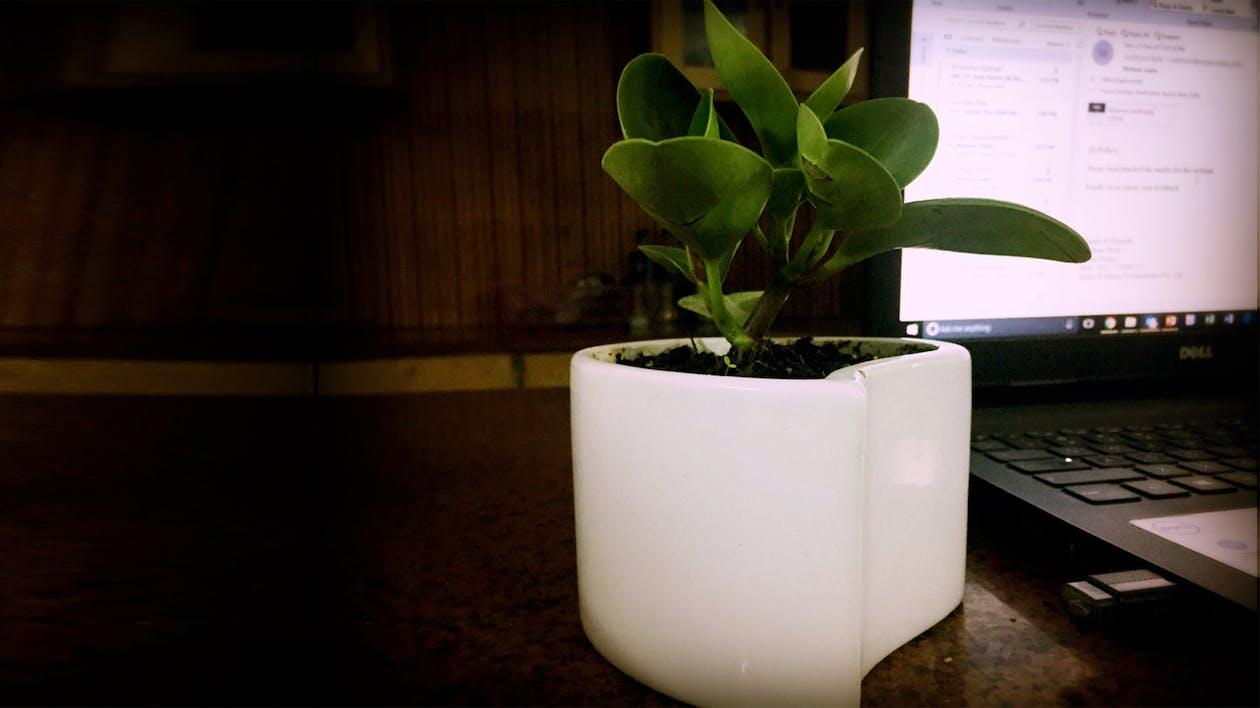 #Plant #Green #Office #Interior #Laptop #Life