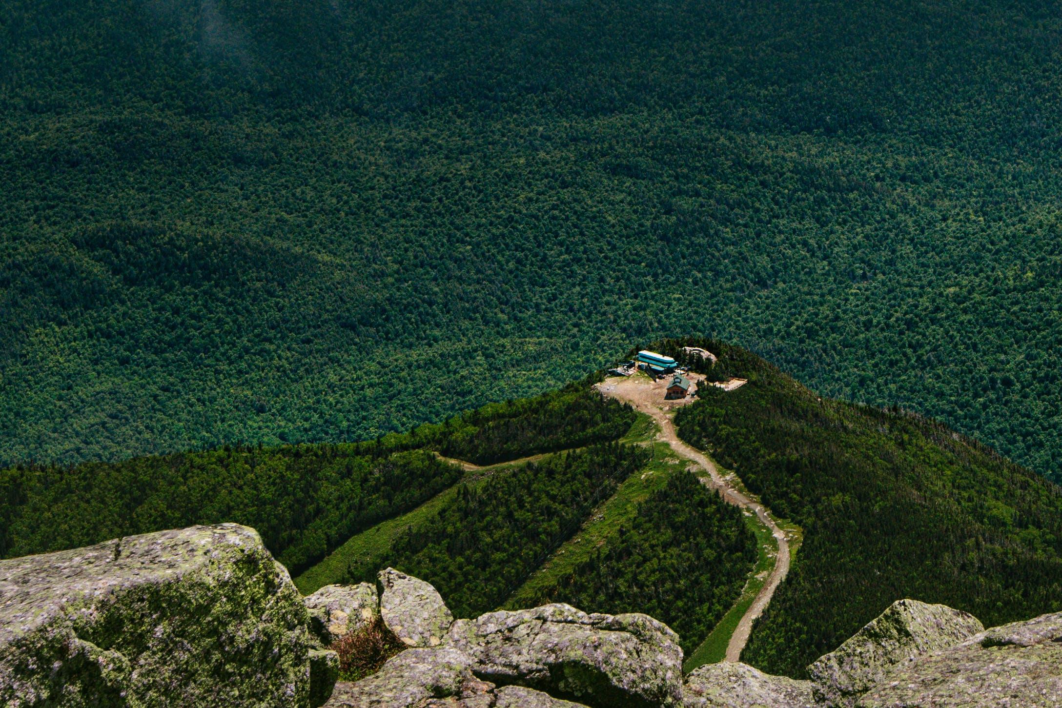 Green Tree on Mountain