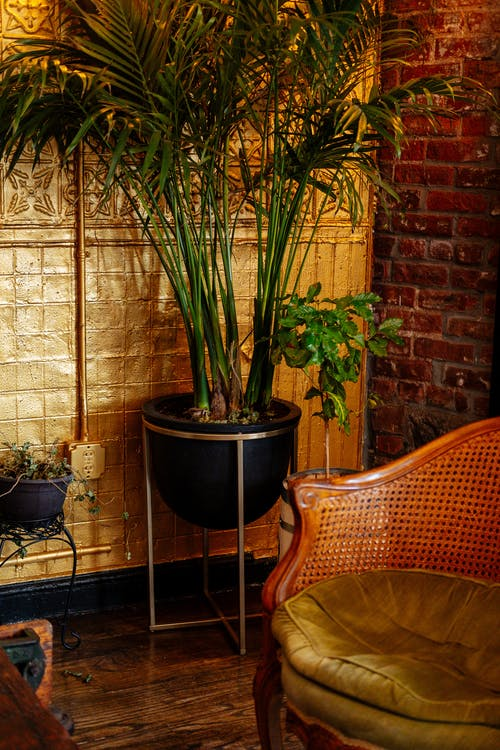 Potted plants and retro furniture in cozy room