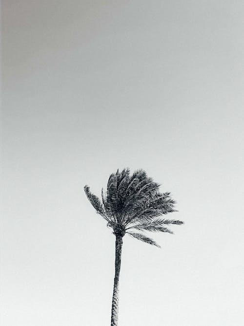 多風, 植物群, 椰子樹, 樹 的 免費圖庫相片