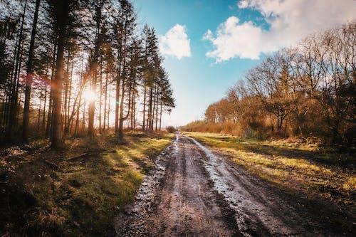Ingyenes stockfotó fák, földes út, földút, út témában