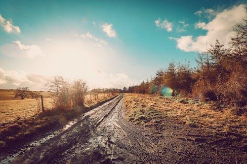 Ingyenes stockfotó ég, fák, földes út, földút témában