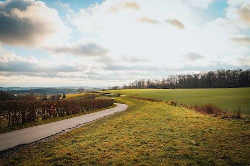Gratis arkivbilde med dagslys, gress, gressfelt, himmel