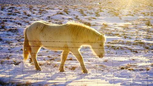 White Horse on Snow Covered Ground
