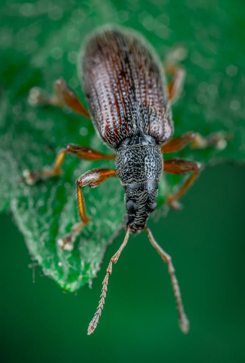Close-Up Photo of Weevil