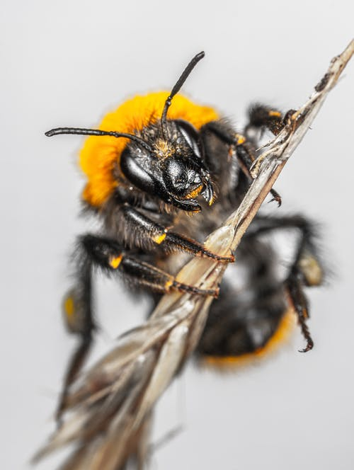 Close-Up Photo of Bee on Stem